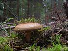 Tief im Wald ...