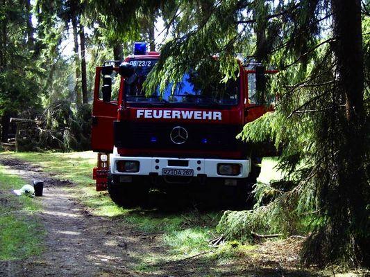 Tief im Walde