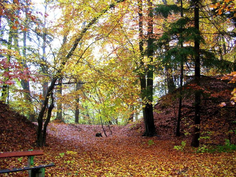 tief in den Herbstwald