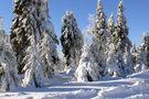 Tief verschneit - und knackig kalt von Günter Roland