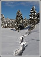 Tief verschneiter Bachlauf