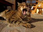 tiefenentspanntes Katzenleben