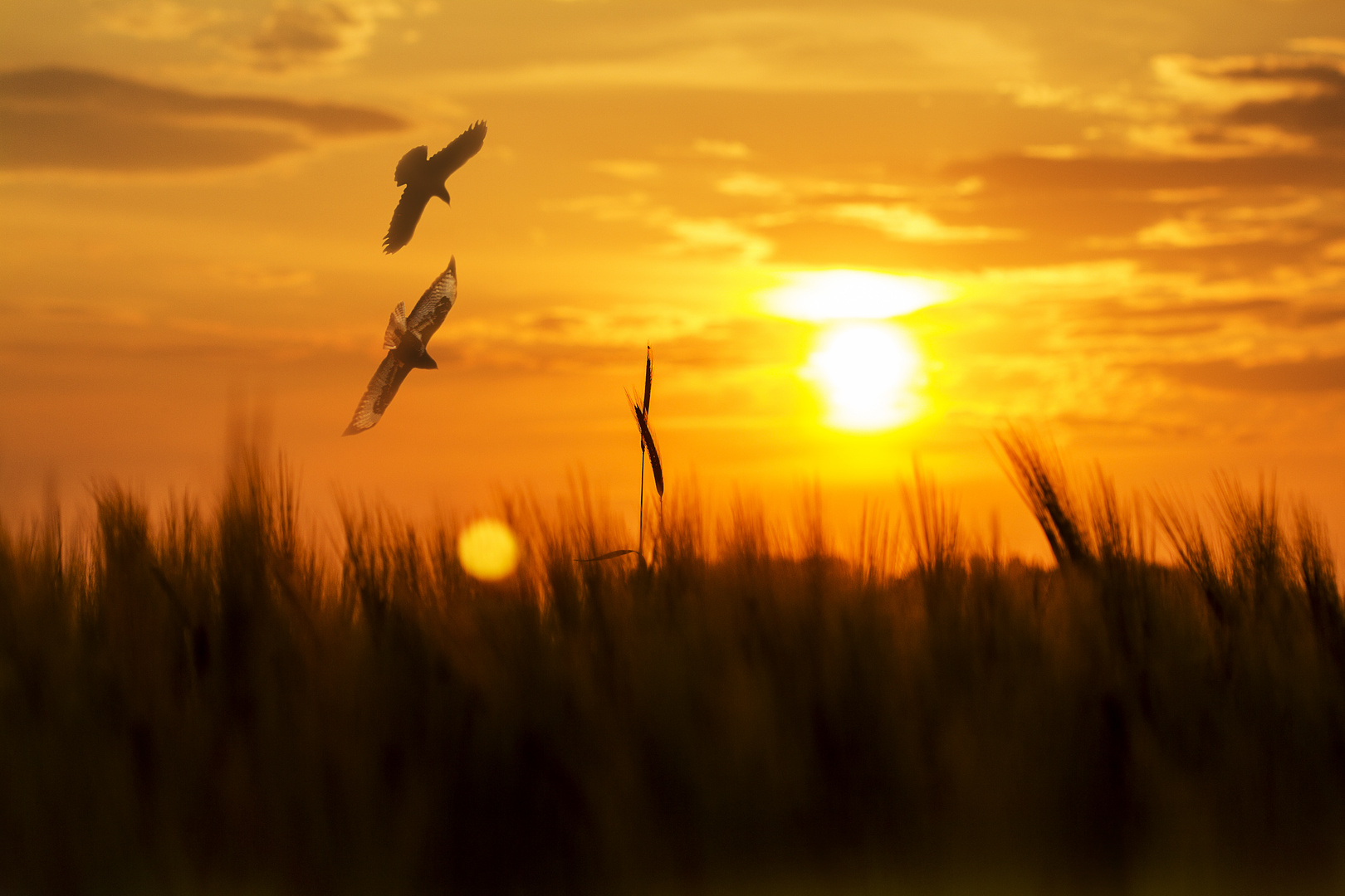 Tiefflug in den Sonnenuntergang