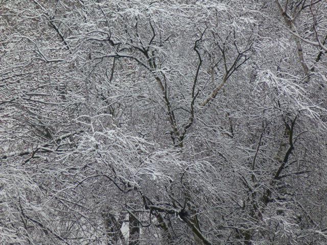 tiefgefroren im März
