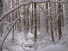 Tiefschnee im Naturwald
