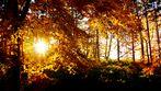 Tiefstehende Sonne, im Ramersbacher - Herbstwald!