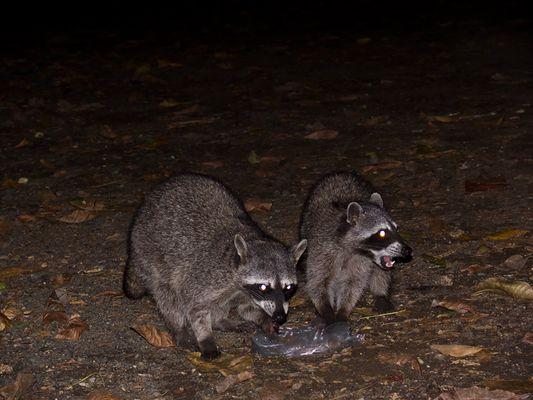 Tiere der Nacht I