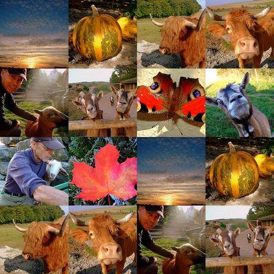 Tiere - Herbst -