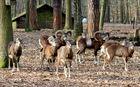 Tiere im Spandauer Forst
