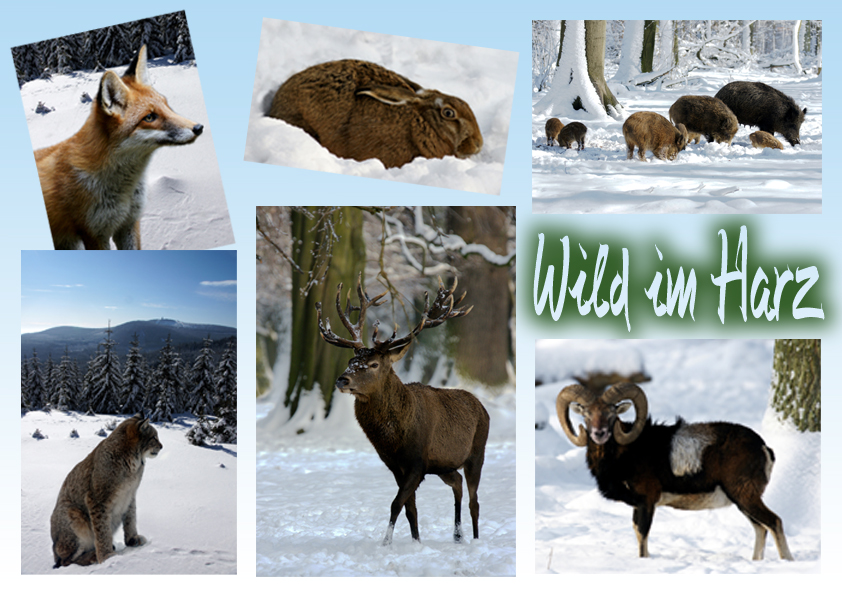 tiere im winter foto bild tiere wildlife wildlife sonstige tiere bilder auf fotocommunity. Black Bedroom Furniture Sets. Home Design Ideas