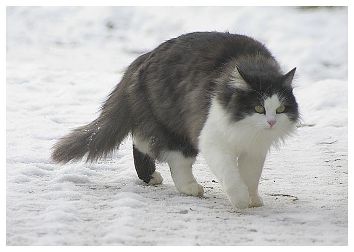 Tiere im winter ii schleichfahrt foto bild tiere for Goldfischteich im winter