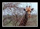 TIERE IN AFRIKA 2