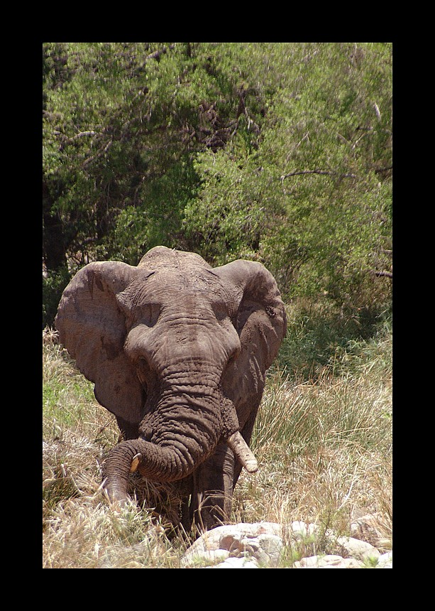 TIERE IN AFRIKA 3