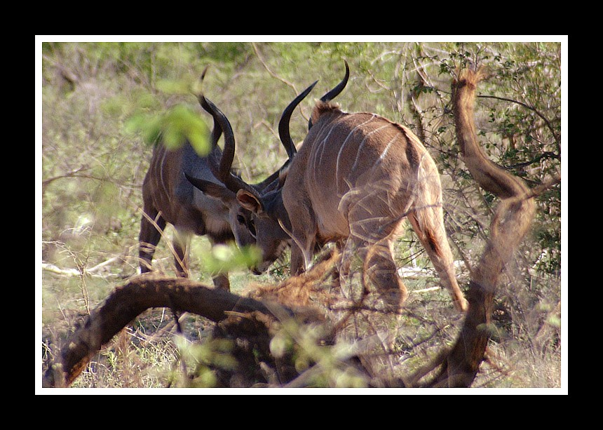 TIERE IN AFRIKA 5