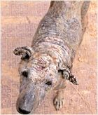 Tiere in Indien