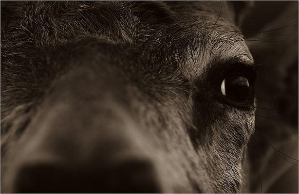 Tiere schauen Dich an