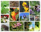 Tiere und Insekten im Garten