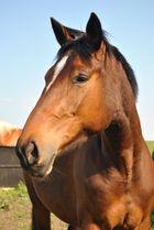 Tierfotografie  Pferd  Bunt