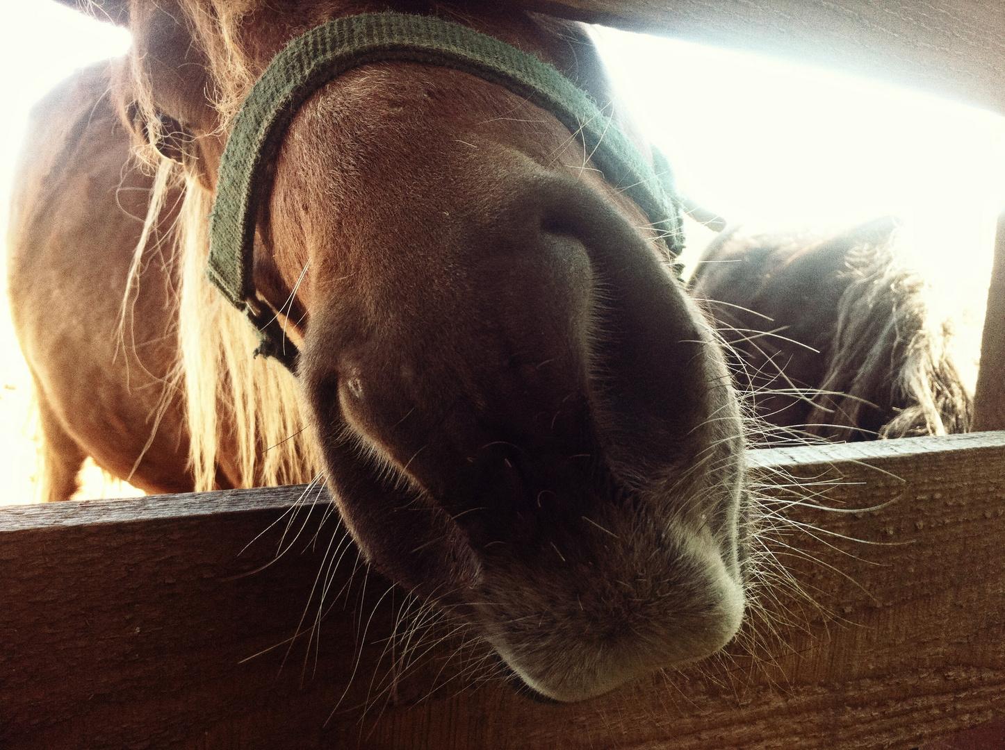 Tierfotografie  Pferd  Detail