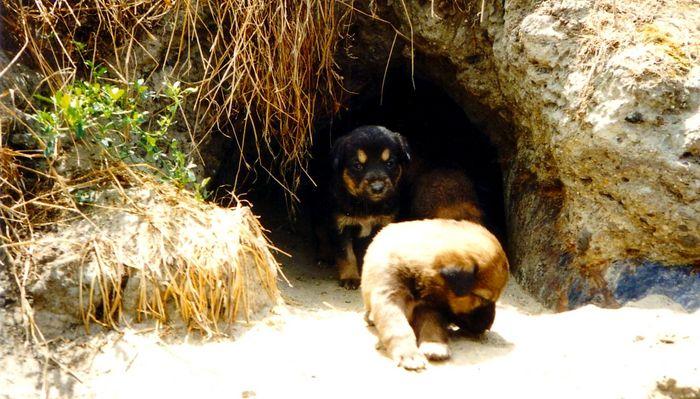 'Tierhaltung' in Rumänien