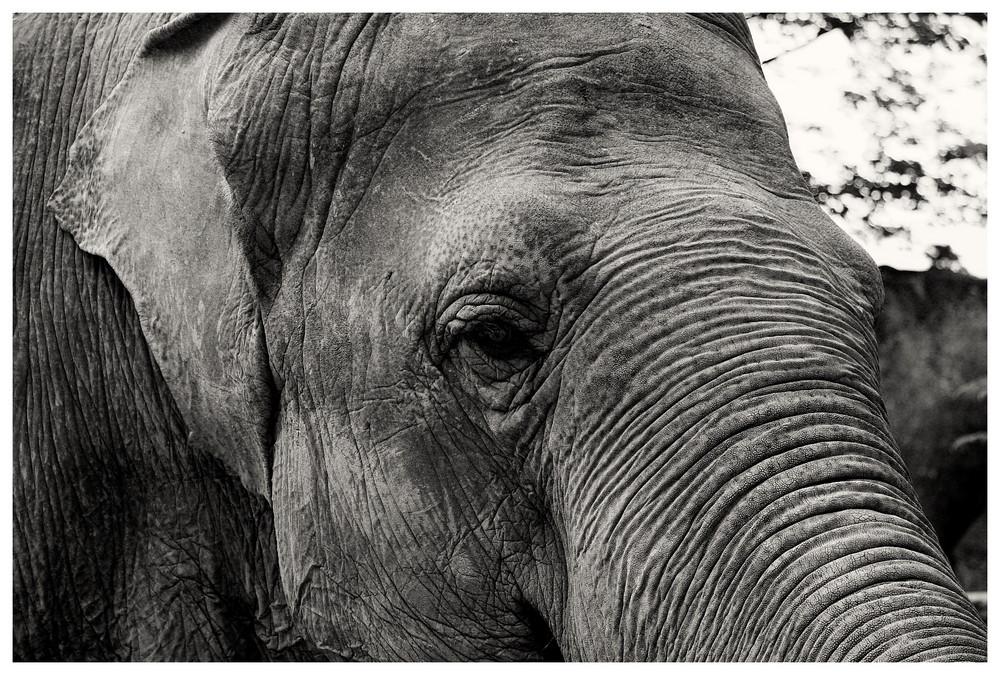 Tierisch - Elefant 1