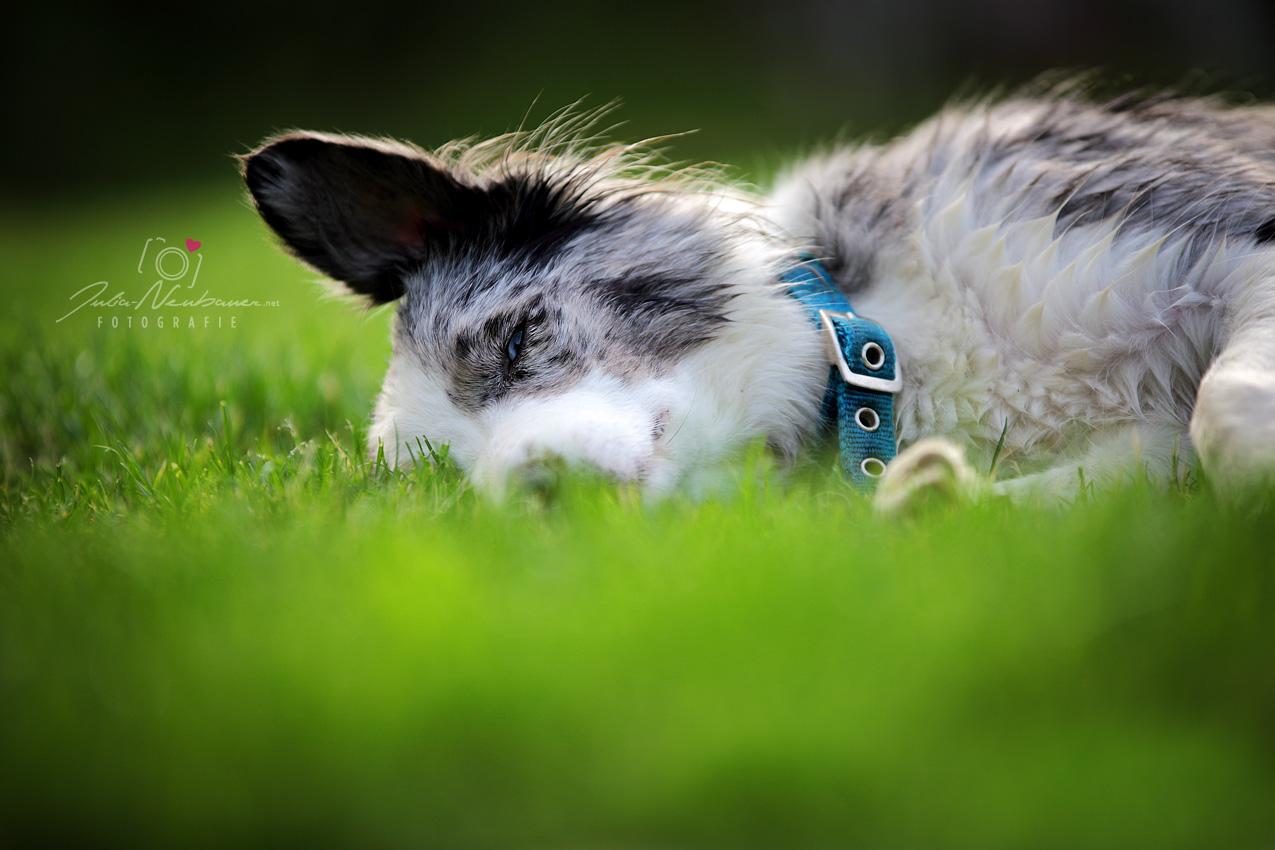tierisch entspannt
