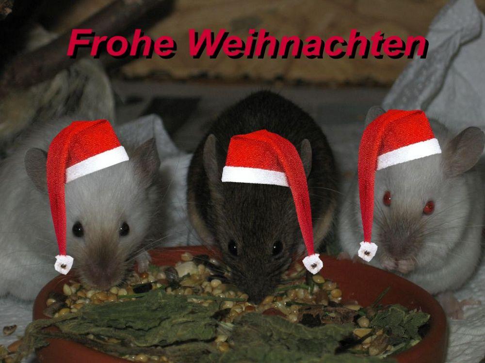 tierisch fröhliche Weihnachten..
