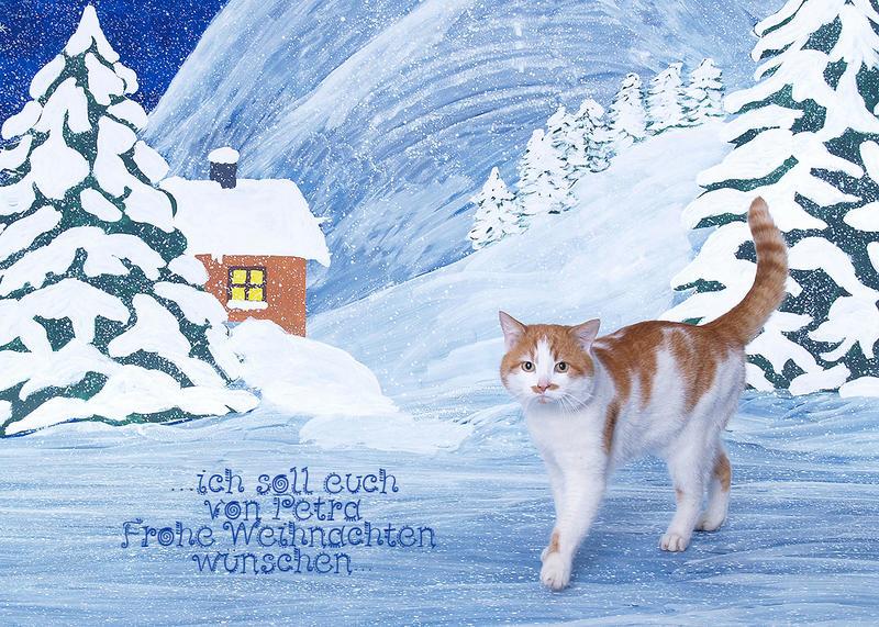tierisch frohe Weihnachten!