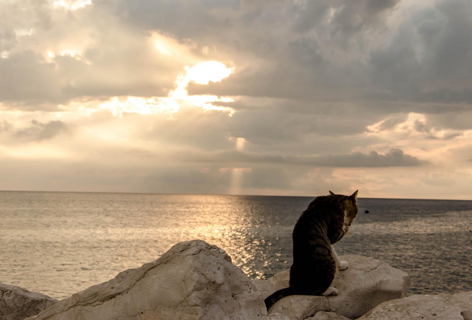 tierisch schöner Sonnenuntergang
