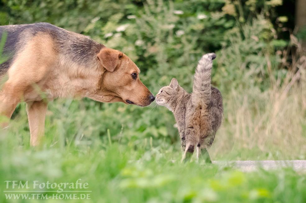 Tierische Begegnung
