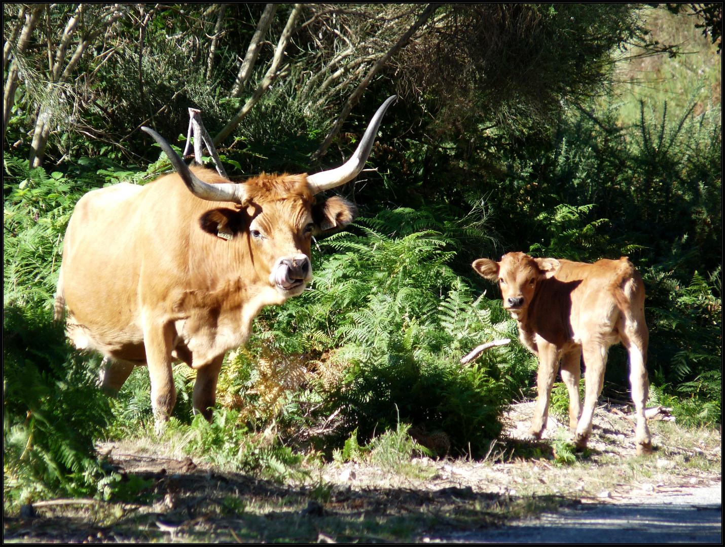 Tierische Begegnungen in Peneda-Gerês