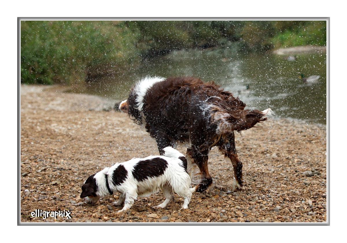tierische Dusche