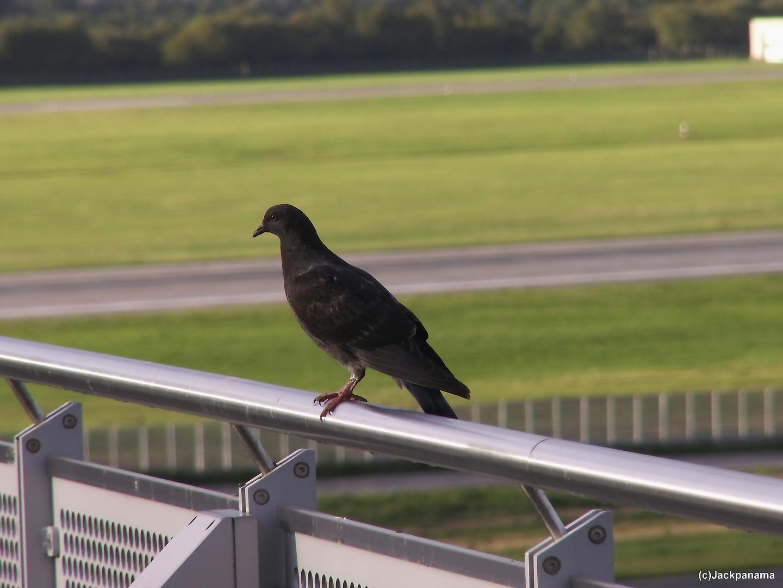 """""""Tierische Luftaufsicht"""" am Flughafen in Düsseldorf"""