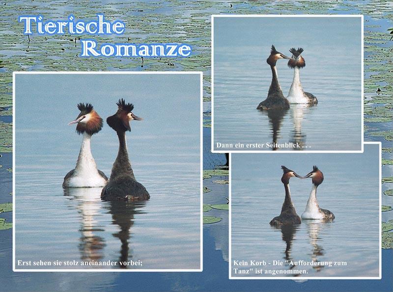 Tierische Romanze.