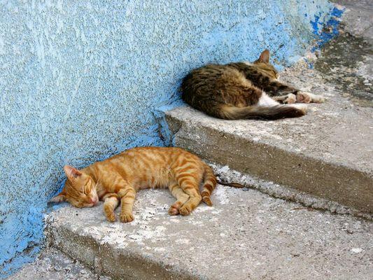 Tierische Siesta in Drakaioi/Samos