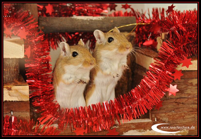 tierische weihnachten foto bild gratulation und. Black Bedroom Furniture Sets. Home Design Ideas
