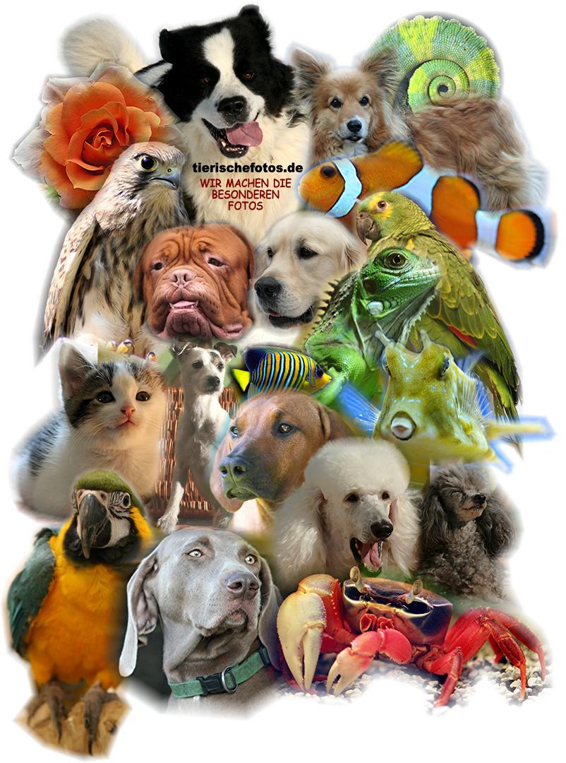 tierischefotos
