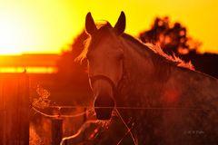 Tierischer Sonnenuntergang
