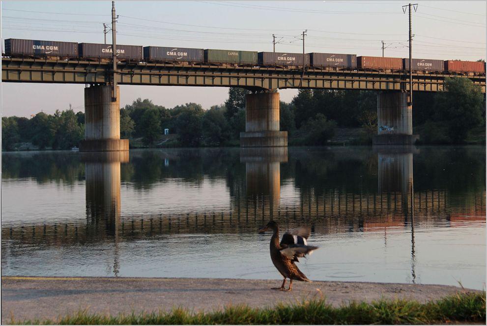 Tierisches an der Donau