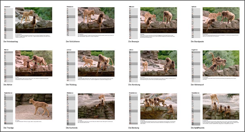 Tierkinder - Kalender