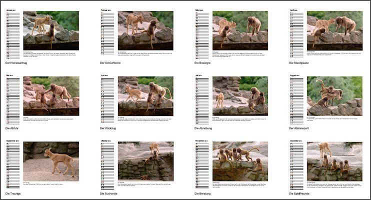 Tierkinder - Kalender 2017