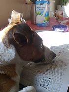 Tierkreiszeichen.....oder Den Hund gibt's nur im Chinesischen