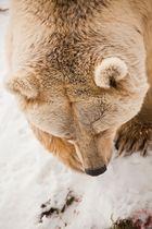Tierpark Arth Goldau