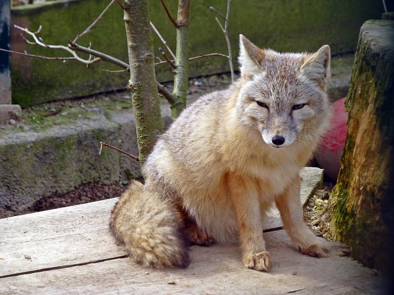 Tierpark Kleve