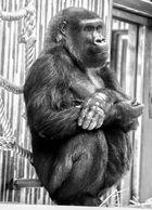 Tierpark Nürnberg: Bei den Affen....