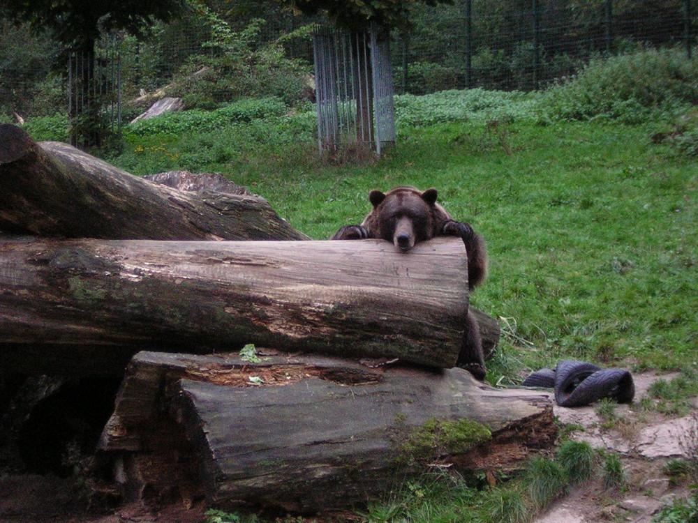 Tierpark Olderdisse