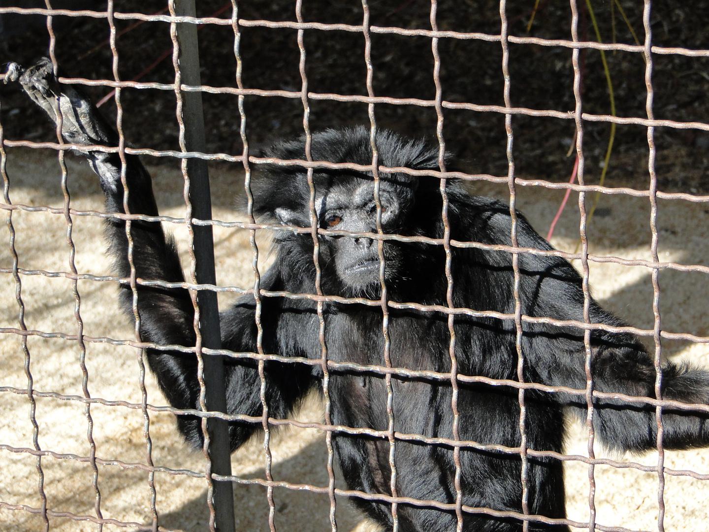 Tierpark Sababurg: 33 Jahre alte Affendame hinter Gittern