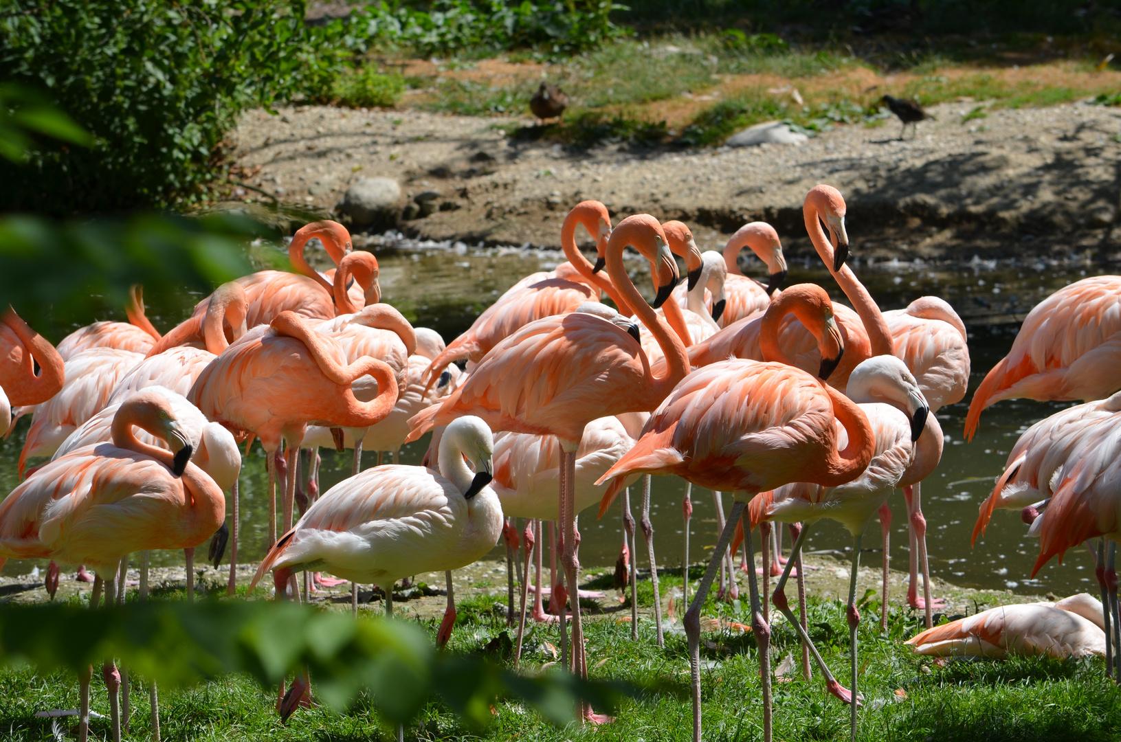 Tierpark Schmiding