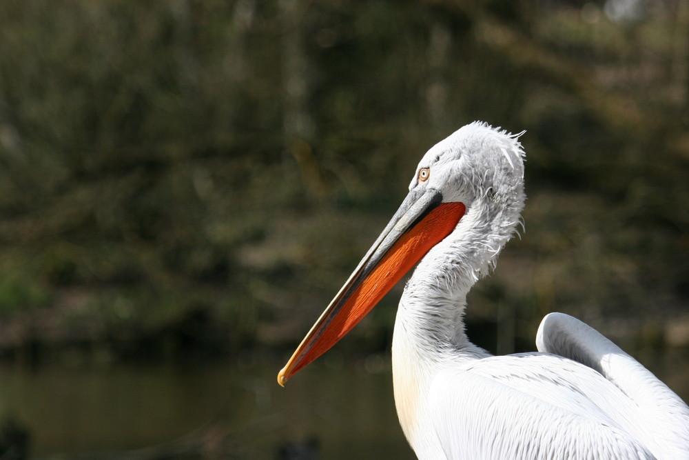 Tierpark Schmieding