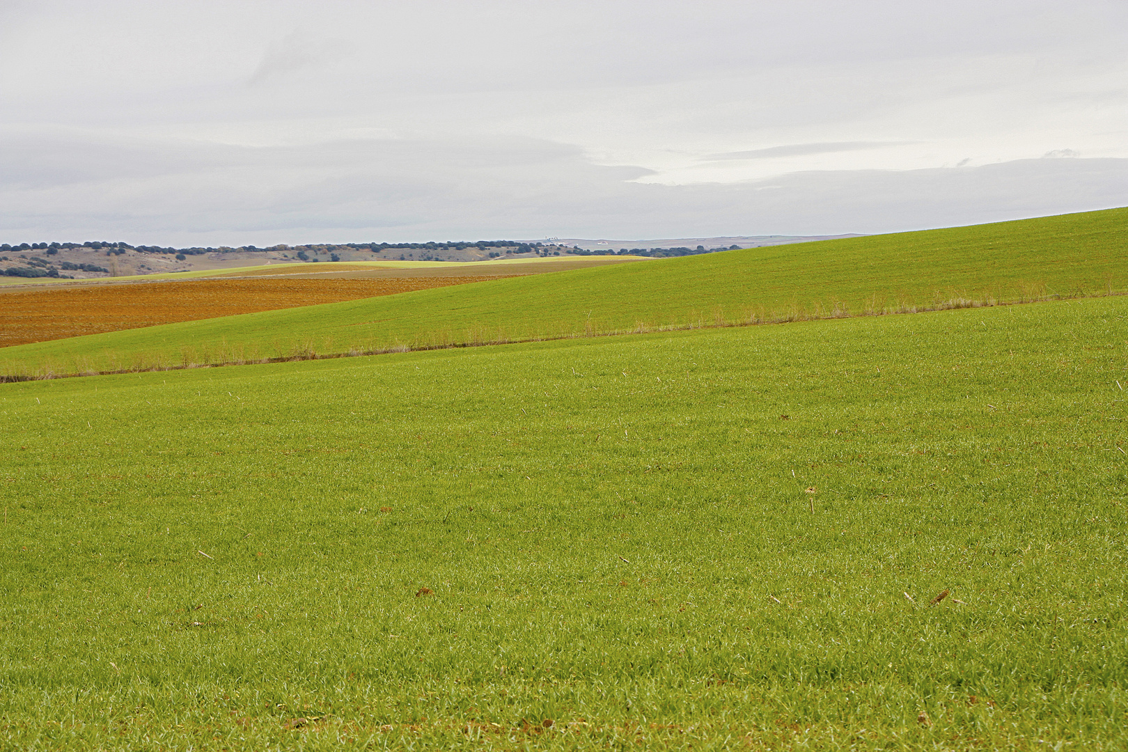 Tierra de Campos 9